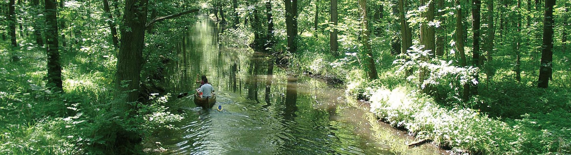 Paddelboot im Hochwald, Foto: Archiv Tourismusverband Spreewald e.V.